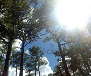 chill, Sunny, and trees image