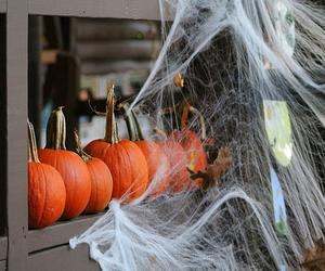 fall, pumpkins, and Halloween image