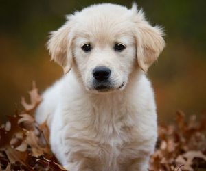 cute, adorable, and puppy image
