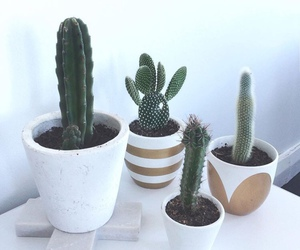 cacti, iphone, and succulents image
