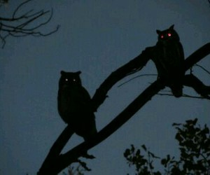 owl, night, and tree image