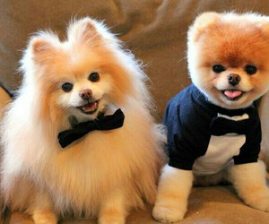 dog, puppy, and boo image