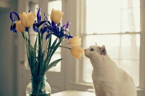 cat, flowers, and photo image
