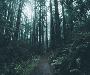 alone, Darkness, and forest image
