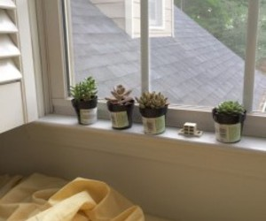 plants, room, and cactus image