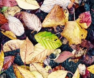 Herbst, einzigartig, and blätter image