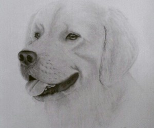 animal, pencil, and white image