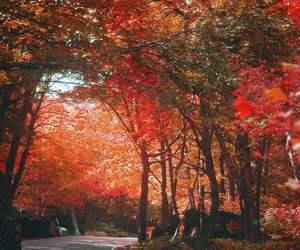 amazing, autumn, and fall image