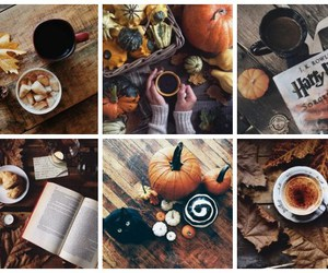 autumn, leaves, and pumpkin image