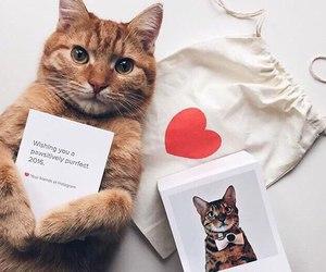 cat, animals, and love image