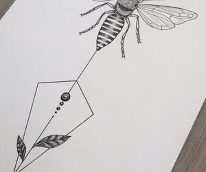 art, cool, and insect image
