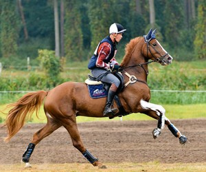 cross country and horse image