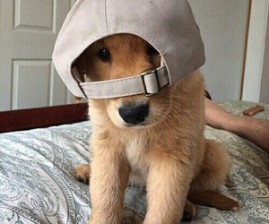 dog, puppy, and hat image