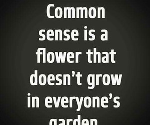 quotes and common sense image