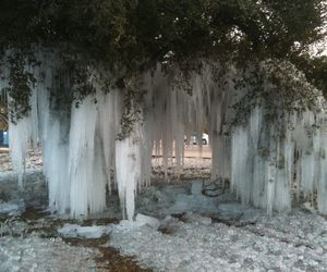 ice, nature, and tree image