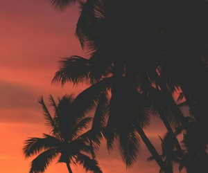 beach, palm, and tumblr image