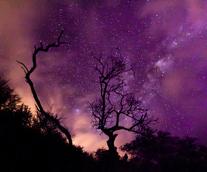 stars, sky, and tree image