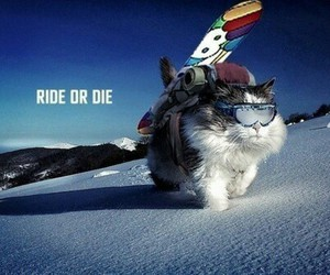 cat, snowboard, and snow image