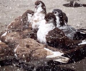 birds, brown, and dark image