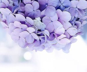 beautiful, spring, and flores image