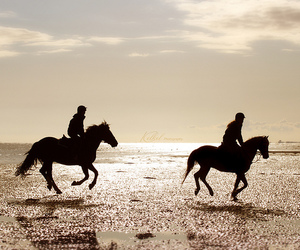 activity, beach, and equestrian image