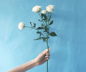 flower, rose, and emi suzuki image