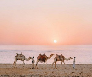 travel and egypt image