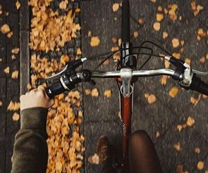 autumn, fall, and bike image