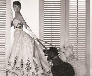 audrey hepburn, dog, and vintage image