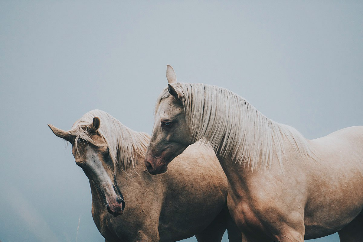 Image About Love In Horses By Hannah Mojave