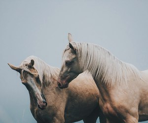 horse, aesthetic, and animal image