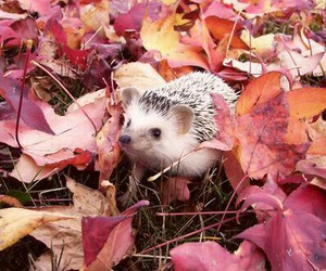 autumn, hedgehog, and leaf image