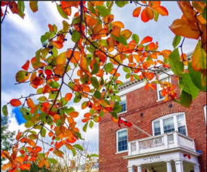building, harvard, and colorful leaves image