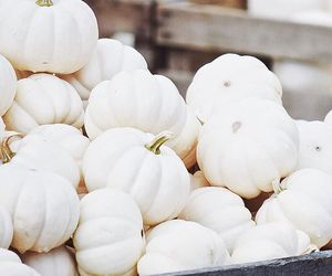 pumpkin, autumn, and white image