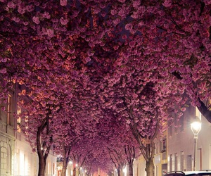 city, night, and flowers image