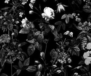 background, black, and botanic image