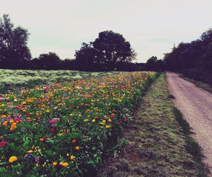 colorful, field, and flora image