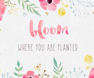 quotes, flowers, and desktop image