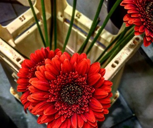 beautiful, red, and flores image