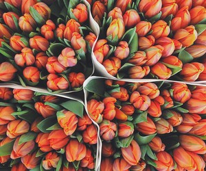 flowers, orange, and theme image