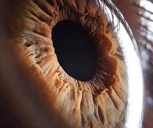 eye, eyes, and brown image
