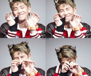 cat, exo, and funny image