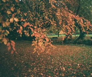 1970s, auburn, and autumn image