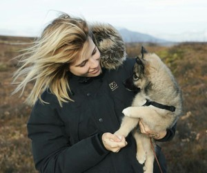dog, iceland, and puppy image
