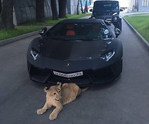 car, luxury, and animal image
