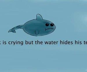 sad, shark, and tears image