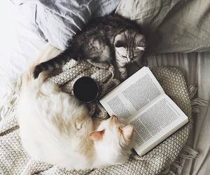 bed, warm, and book image