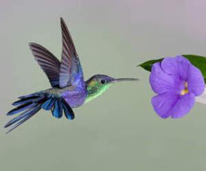 bird, flower, and hummingbird image