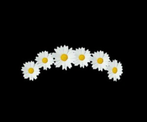 overlay, flower, and png image