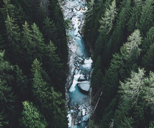 forest, nature, and sea image